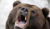 Russian-bear-300x180