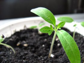Seed Plant Growth