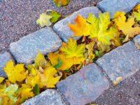 leaves-219150_960_720