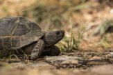 turtle-1309900_1280